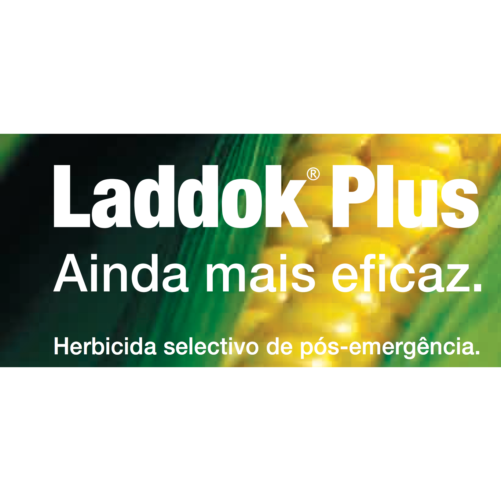 Laddok Plus